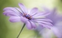 عکس گل بنفش بسیار زیبا