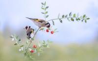 عکس 2 پرنده روی شاخه درخت