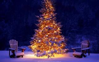 درخت کریسمس گالری عکس کریسمس