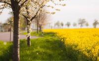 عکس بهار قشنک ساکسونی آلمان