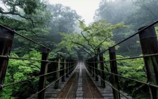 عکس زیبا و رویایی از پل چوبی داخل جنگل فوق العاده
