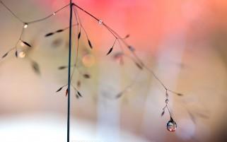 عکس شبنم بعد از باران