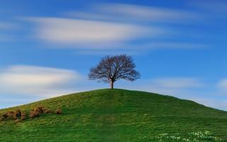 عکس تک درخت روی تپه سبز