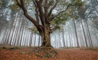 عکس زیبا از درخت با شکوه