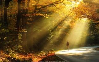 عکس زیبا از جنگل پاییزی و جاده پاییزی