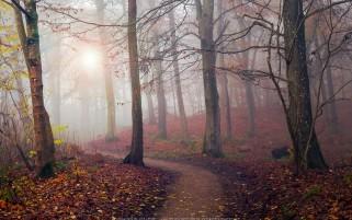 عکس زیبا و حرفه ای از جاده جنگلی