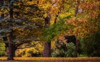 عکس رنگ های پاییزی گالری عکس پاییز