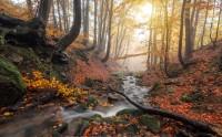 عکس رود جنگل پاییزی