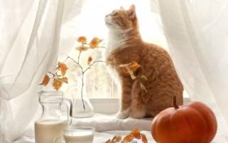 عکس گربه در چیدمان پاییزی