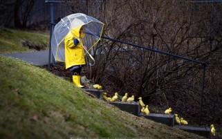 عکس بچه و جوجه اردک ها