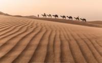 عکس کاروان در بیابان