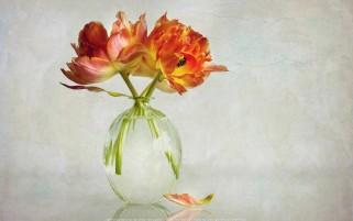 عکس لاله ها در گلدان
