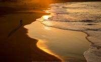 عکس زیبا و حرفه ای از غروب ساحل دریا