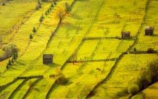 عکس زیبا مینیاتوری مزرعه
