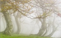 عکس مه صبحگاهی بهاری جنگل