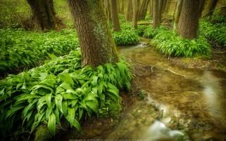 عکس زیبا رود جنگلی
