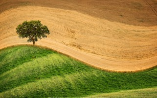 عکس زیبا از مزرعه گندم و دشت سبز