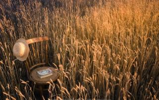 عکس زیبا و حس برنگیز گندمزار