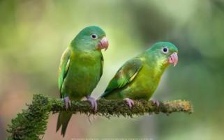 عکس کیفیت بالا طوطی سبز زیبا