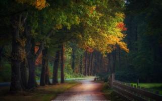عکس زیبا و حس برانگیز آغاز پاییز جاده پاییزی