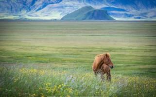 عکس اسب قهوه ای پا کوتا در دشت بهاری