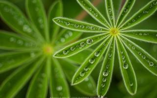 عکس قطره های باران و شبنم