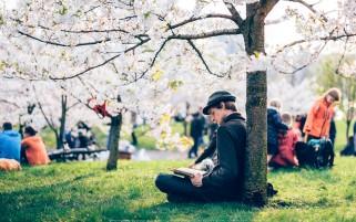 عکس روز بهاری با مطالعه