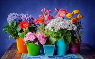 عکس زیبا و نشاط آور از گل دان های بهاری