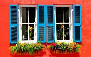عکس پنجره بهاری نارنجی