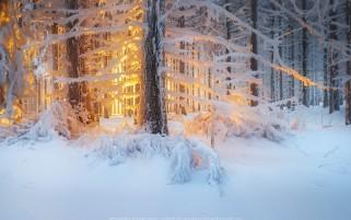 عکس طلوع خورشید زیبا در جنگل زمستانی