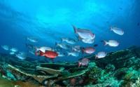عکس زیبا از ماهی های زیر آب اقیانوس