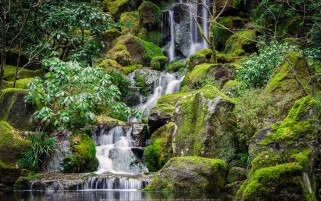 عکس زیبا و کیفیت بالا از باغ ژاپنی