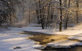 عکس رویایی و زیبا از طلوع خورشید در جنگل