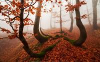جنگل پاییزی در مه