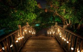 رستوران استوایی در شب