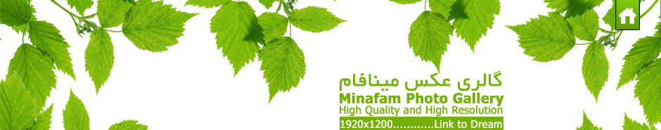 گالري عكس كيفيت بالا،مينافام minafam