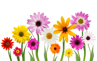 گل های رنگی