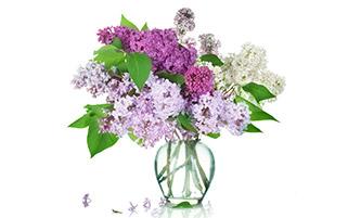 گلدان گل های یاس