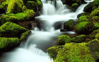 نهر کوچک،طبیعت المپیک،واشنگتن