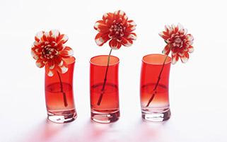 گل های قرمز زیبا