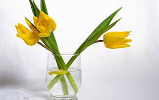لاله های زرد در گلدان