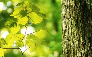 برگ های سبز در خواب