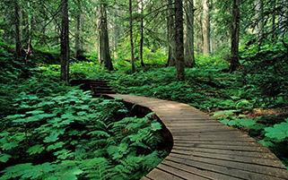 مسیر چوبی،کانادا