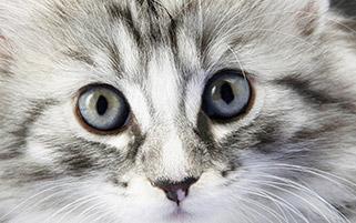 پرتره گربه