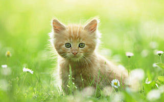 بچه گربه در تابستان