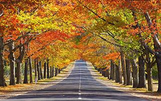 خیابان خاطره ها،استرالیا