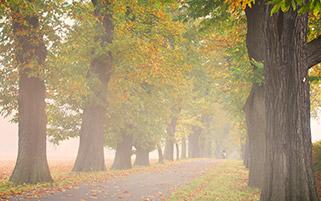 مه و پاییز