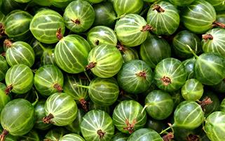 میوه های استوایی
