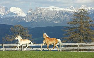 بازی اسب ها