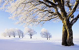 تابلویی از زمستان